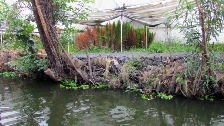Chinampas-based agriculture is still practiced today in the region of Xochimilco. (Xochimilco, Mexico, 2016.)