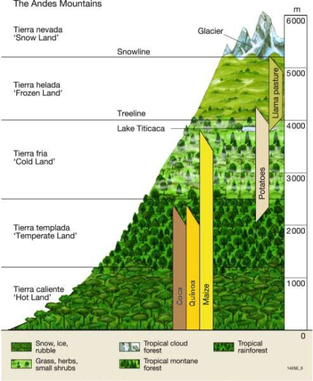 Ideal altitudes for the cultivation of various Andean crops.