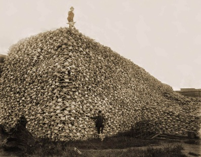 """The US Army sanctioned and actively endorsed the wholesale slaughter of bison herds. The federal government promoted bison hunting for various reasons, to allow ranchers to range their cattle without competition from other bovines, and primarily to weaken the North American Indian population by removing their main food source and to pressure them onto the reservations during times of conflict. Without the bison, native people of the plains were often forced to leave the land or starve to death. One of the biggest advocates of this strategy was General William Tecumseh Sherman. On June 26, 1869, the Army Navy Journal reported: """"General Sherman remarked, in conversation the other day, that the quickest way to compel the Indians to settle down to civilized life was to send ten regiments of soldiers to the plains, with orders to shoot buffaloes until they became too scarce to support the redskins."""" According to Professor David Smits: """"Frustrated bluecoats, unable to deliver a punishing blow to the so-called """"Hostiles,""""unless they were immobilized in their winter camps, could, however, strike at a more accessible target, namely, the buffalo. That tactic also made curious sense, for in soldiers' minds the buffalo and the Plains Indian were virtually inseparable."""""""