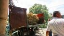 Raw sugar cane delivery, Havana, Cuba, 2017.