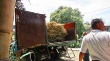 Raw sugar cane delivery. (Havana, Cuba, 2017.)