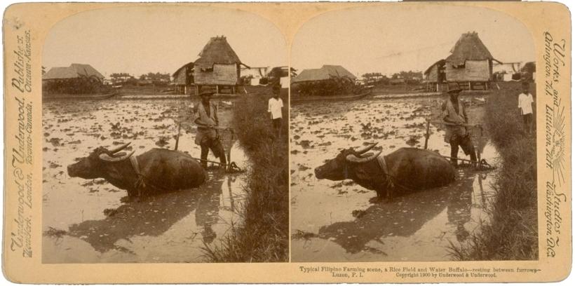 typical filipino farming scene