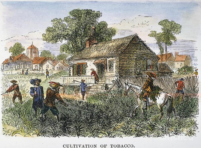 3-tobacco-plantation-granger