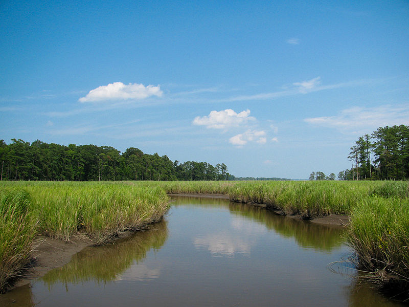 Marsh_-_Colonial_National_Historical_Park_(Robin_Baranowski,_NPS_Photo)_(8426448355)