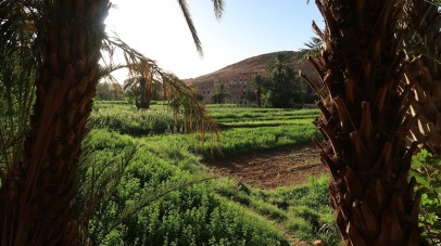 Staple crops of the modern Berber are wheat, corn, dates, and tomato.