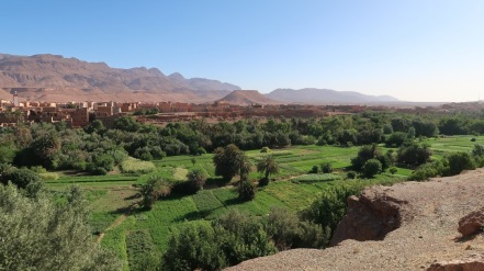 The Berber are experts of irrigation, drawing water from mountain rivers and feeding it via gravity into green oases of productivity.