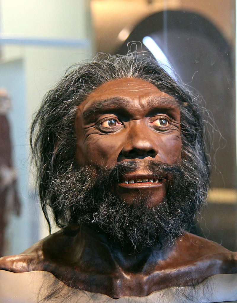 Homo_heidelbergensis_adult_male_-_head_model_-_Smithsonian_Museum_of_Natural_History_-_2012-05-17