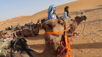 Humans may have first domesticated dromedaries in Somalia and southern Arabia around 3,000 BC.